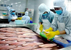 Vietnam fretting competition from other pangasius-producing countries