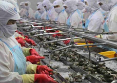GLOBAL SHRIMP SUPPLY WILL REMAIN HIGH FOR FORESEEABLE FUTURE